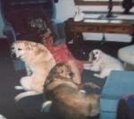 Molly, Ozzy, Skylar