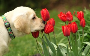dogs-flowers_102227